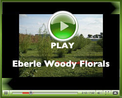 Eberle_Woody_Florals